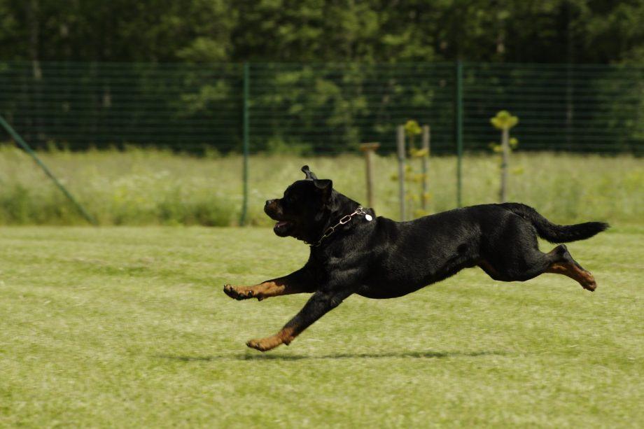 dog-823727_1280